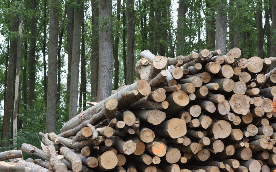 ¿Qué usos podemos dar a la madera?