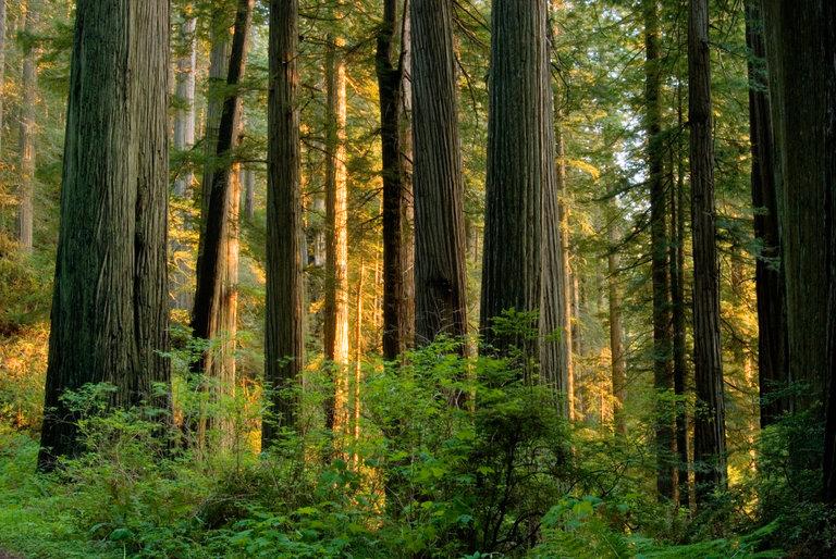 Biomasa, un #empleoverde con un futuro rentable