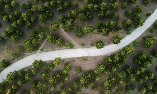 España apenas utiliza el 39% de los 50 millones de metros cúbicos de biomasa que generan sus bosques cada año